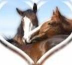 il sont tro bo ces chevaux sur cette photo