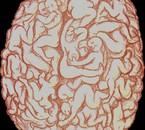 tu vois ce qu'il y a dans les cerveaux africain ?