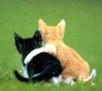 mm les animaux tombent amoureux vous savez
