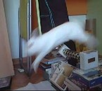 chanel qui saute