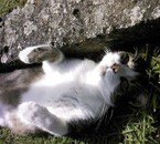 mn chat cacauètte :p