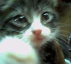 Baby Titou