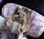 Ma chienne Zoé