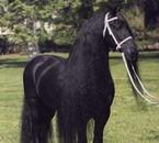un des chevaux de mes réve