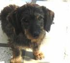mon chien coco