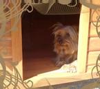 mOn chien:karamel=)