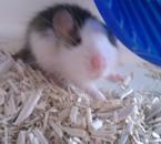 Nobu mon new rat