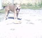 mon chienavec son jouet chez un amies