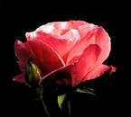 Un symbole de l'Amour <3 :-) ..!