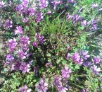 le printemps à sidi daoud  naouart elkhobbiza