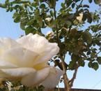 Le bonheur est une fleur qu'il ne faut pas cueillir.