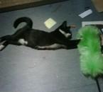 super chat a la rescousse des plumeaux et des baleyettes