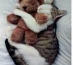 sa c mon chat en train de dormir avec son doudou