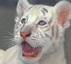 The tigres