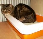 Tigrou, c'est endormi dans son gravier !