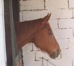 cavallou