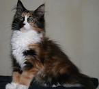 voici mon chat diva
