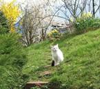 Mon chat, Bichou ( une fille )