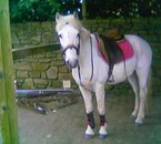 mon poney crin blanc