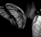les ailes de l'amoure