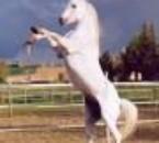 cheval qui se cabre