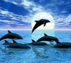 un coucher de soleil avec une famille de dauphins