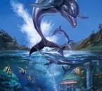 un saut de liberté avec les dauphins