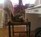 Malo sur ma chaise