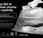 Refusé la captivité des Requins-Baleines