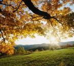 La vie à travers les saisons