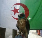 l'algerie en force