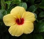 cette magnifique fleur représente la nature comme moi!!!lol!