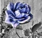 une fleur unique pour les deux amour de ma vie