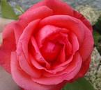 Tite flower du jardin