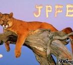 Puma - JPFE