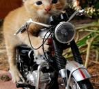 j'aime la moto