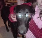 Notre chien Sandy.trop belle.