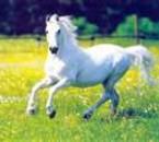 cheval des reves