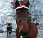 cheval renne