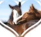 chevaux simbolant l'amour