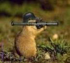 Sergent Castor avec une arme a feu