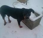 mon chien dans la neige