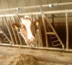 ptite vache(Céline)