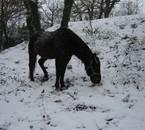 Mon c½ur dans la neige