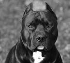 mon future chien !!