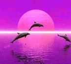 piti dauphins