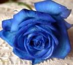 c la fleur de ma copine