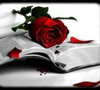 Livre & Rose Rouge