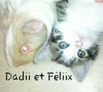 Cochon & chat =)