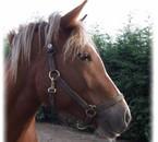 notre cheval.....MISS
